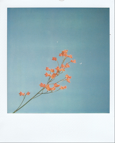 If I were a color I would forsuredly be coral The picture of summer a